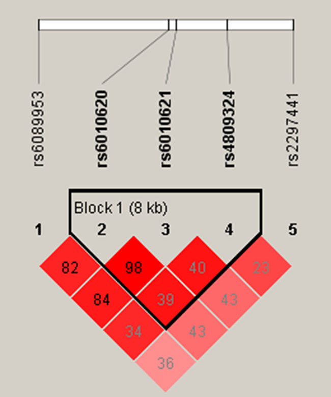 Haplotype block map for all the SNPs of the RTEL1 gene.