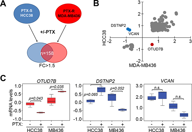OTUD7B upregulation and DSTNP/VCAN downregulation predict a poor response to paclitaxel treatment in TNBC cells.
