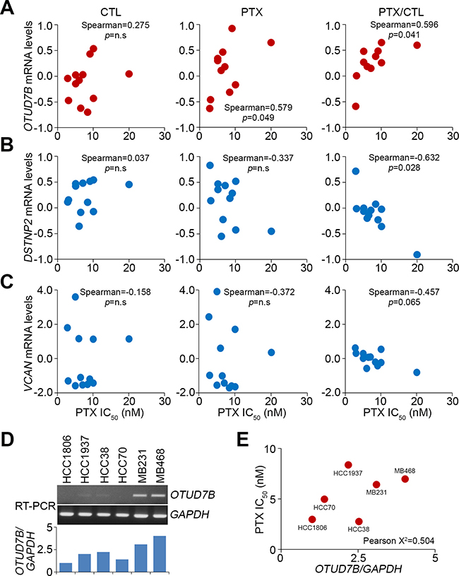 OTUD7B and DSTNP/VCAN positively and negatively correlate, respectively, with PTX IC50 concentrations in a panel of TNBC cell lines.