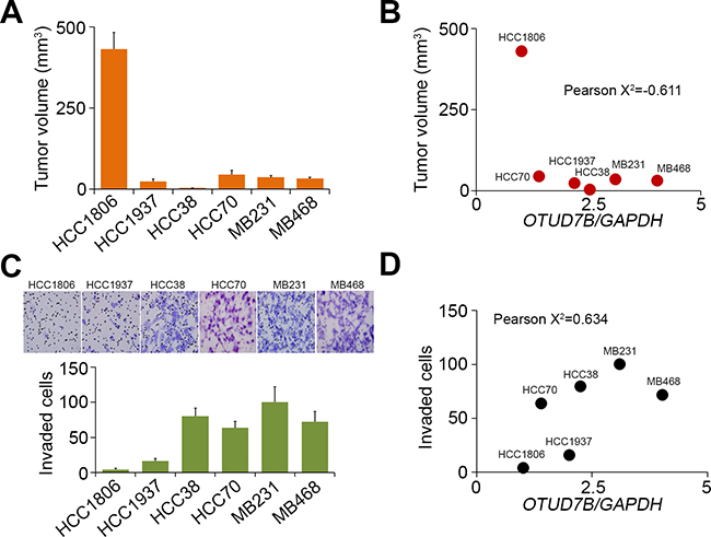 The correlations of OTUD7B transcriptional levels with the tumor growth, invasion and lung metastatic colonization abilities of TNBC cell lines.