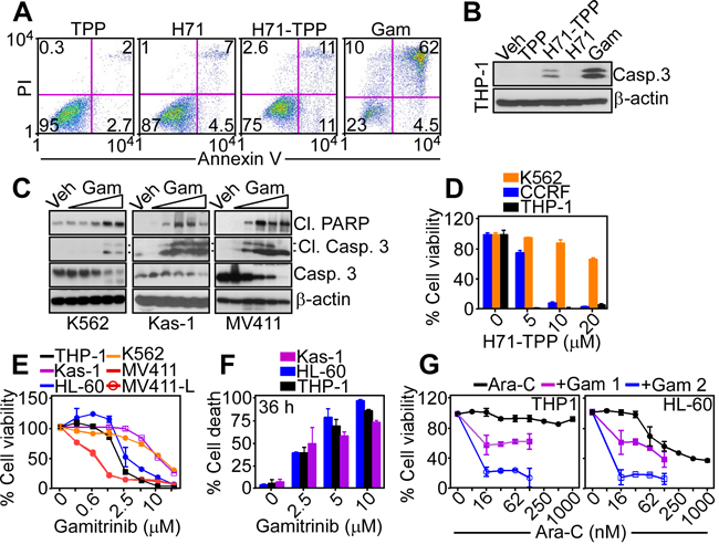 PU-H71-TPP induces tumor cell death.