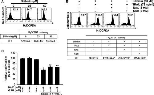 ROS-mediated DR5 expression induced by silibinin/TRAIL.