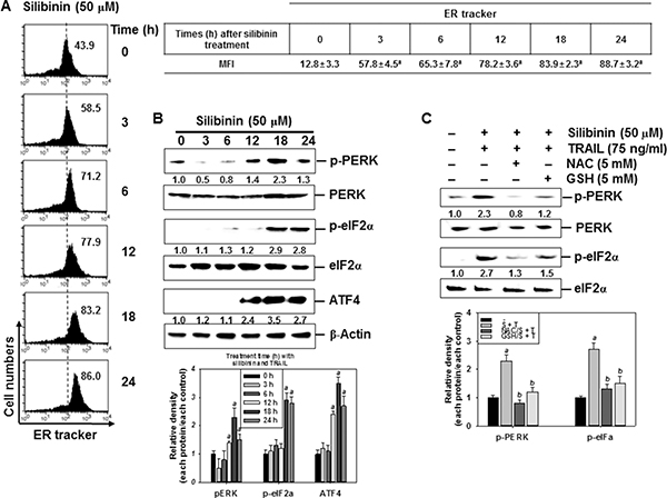 Induction of ROS-mediated ER stress in response to silibinin/TRAIL.