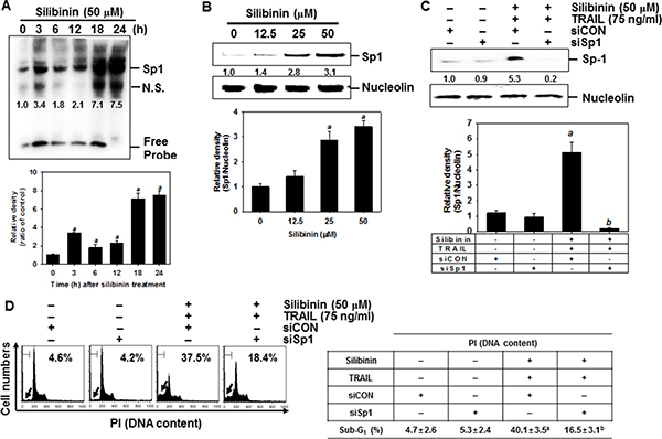 DR5 upregulation by silibinin through Sp1 activation, leading to apoptosis.