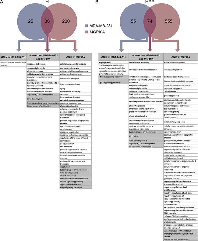 Transcriptome analysis of MCF10A and MDA-MB-231 cells after hypoxia and hypoxia + PP242.