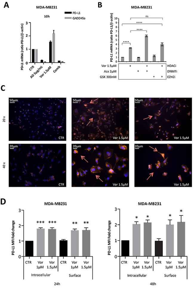 Vorinostat induces PD-L1 expression in breast cancer cell lines directly at a transcriptional level and this translates to increased PD-L1 expression on the cell surface.
