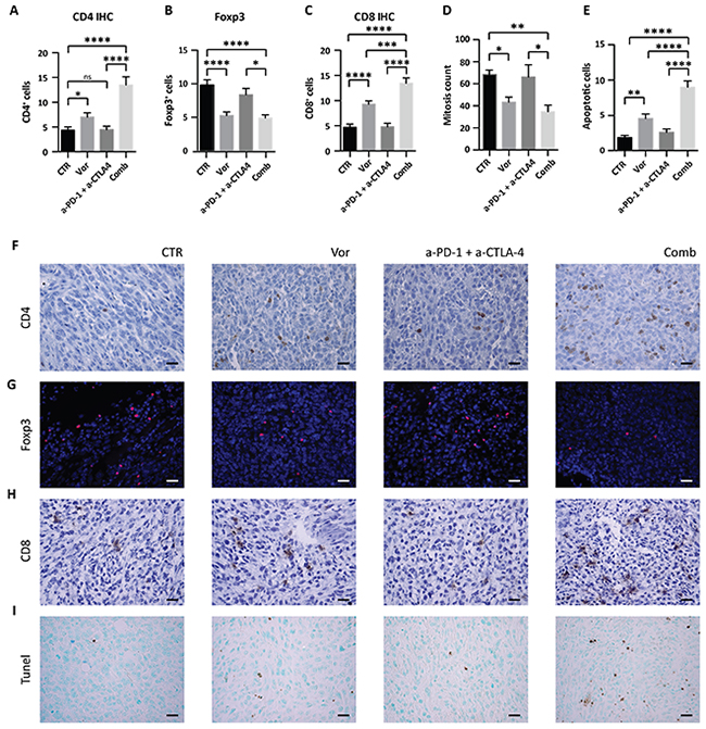 Effect of vorinostat/immunotherapy treatment on immune cell subset, proliferation and apoptosis in 4T1 allograft tumors.