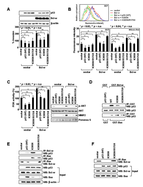 Cytoplasmic p53 suppresses cell invasion by binding to Bcl-w and liberating Bax from Bcl-w.