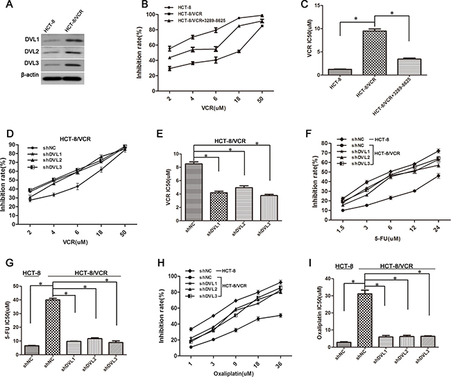 Silencing DVL promoted multidrug-induced cytotoxicity in CRC cells.