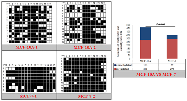 Methylation patterns and significant difference of human NPY-P1 CpG island of between MXF-10A and MCF7.