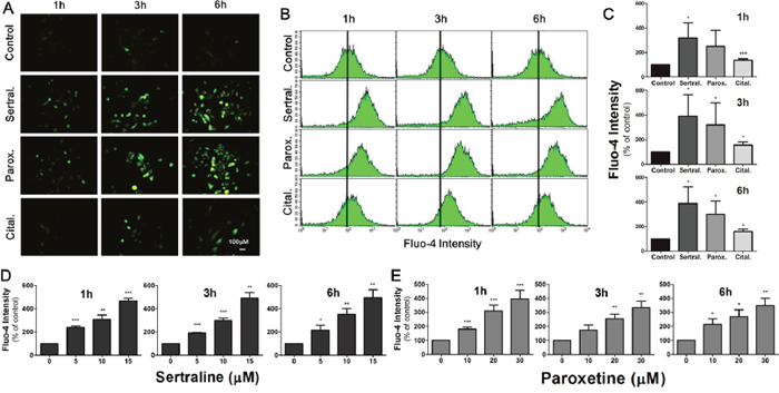 Sertraline and paroxetine induce dose-dependent intracellular calcium elevation in astrocytes.