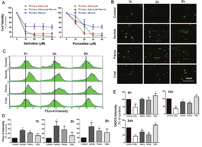 Sertraline and paroxetine reduced cell viability in primary astrocytes, neurons, and their primary mixed culture.