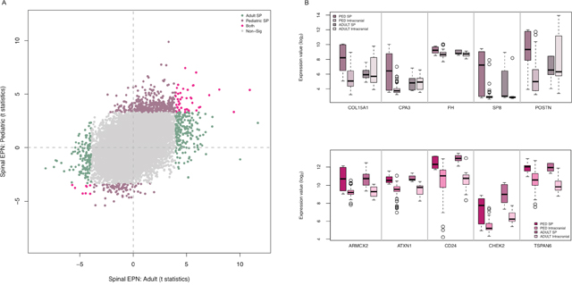 Pediatric SEPNs show distinct expression characteristics from adult SEPNs.