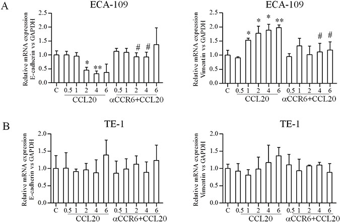 Effects of CCR6-CCL20 interactions on EMT of ESCC cell on mRNA level.