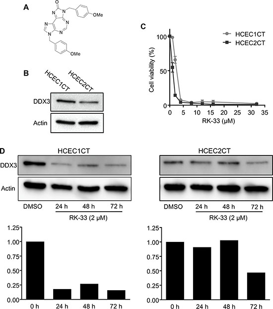 RK-33 sensitivity of human colon epithelial cell lines.