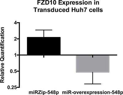qPCR results of Frizzled 10 expression in Huh7 cells after transduction with miRZip-548p or miR548p over expression as compared to cells transduced with scramble sequence virus in biological triplicate (p = 0.026 and p = 0.024 respectively).