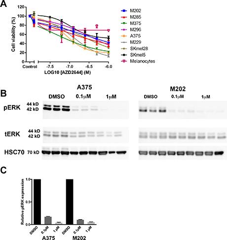 MEK inhibition reduces the viability of melanoma cells.