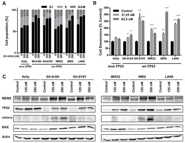 DS-3032b treatment stabilizes TP53 and selectively induces expression of TP53 target genes in neuroblastoma cells with wildtype TP53 leading to G1 cell cycle arrest and senescence induction.