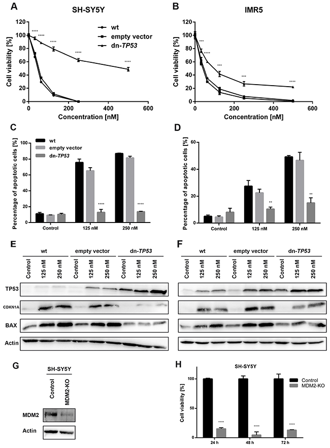 Stable, ectopic expression of dominant-negative TP53 (dn-TP53) attenuates antiproliferative and pro-apoptotic activity of DS-3032b, and CRISPR-mediated MDM2 knockout (KO) mimics DS-3032b treatment.