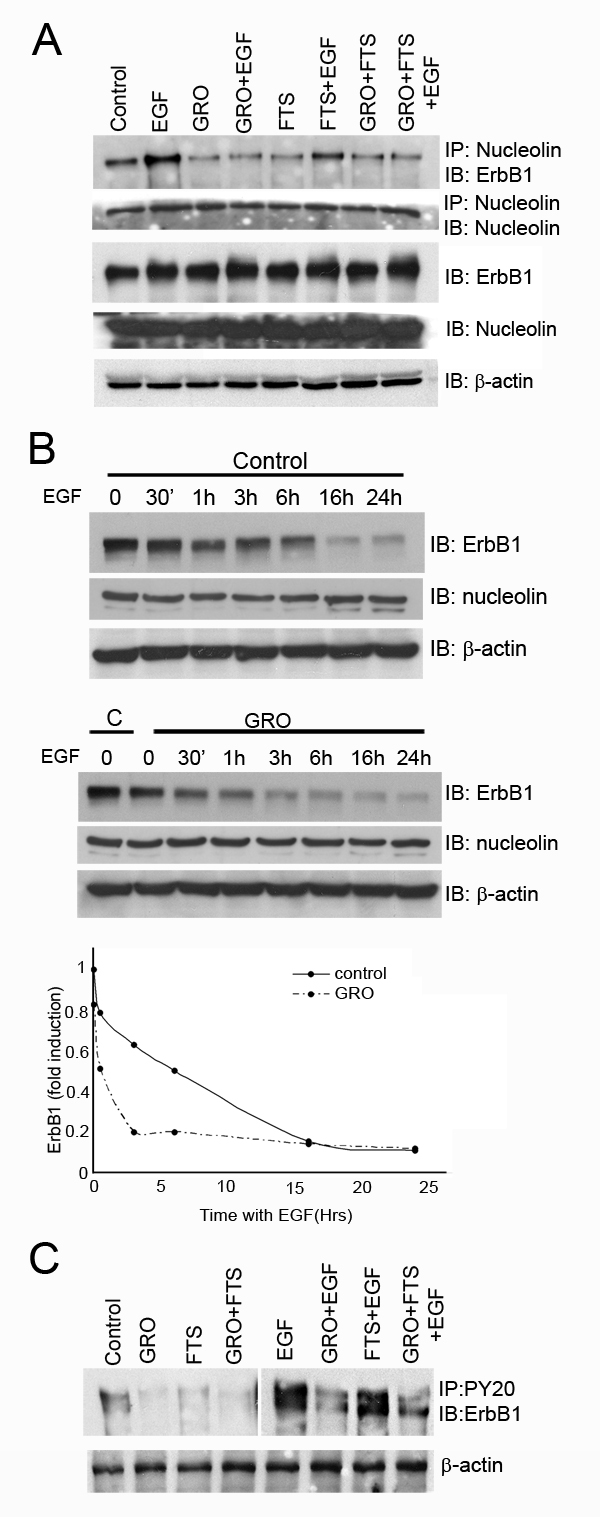 Ras and nucleolin inhibition reduces receptor nucleolin interaction and EGF induced ErbB1 phosphorylation.
