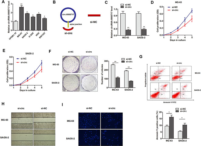 CircRNA-0008717 plays an oncogenic role in osteosarcoma cells.