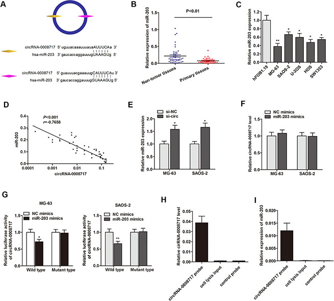 CircRNA-0008717 directly binds to miR-203 in osteosarcoma cells.