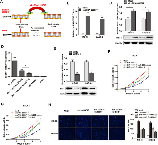 CircRNA-0008717 promotes osteosarcoma progression by sponge activity of miR-203 and upregulation of Bmi-1.