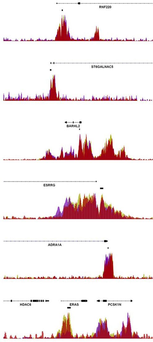 Enrichment of EZH2 at rectal cancer DMRs.