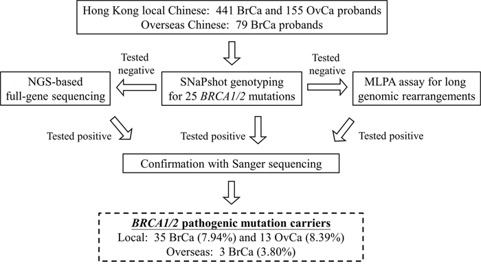 Workflow of BRCA1/2 mutation screening of 596 breast (BrCa) and ovarian cancer (OvCa) patients (local cohort) and 79 overseas Chinese breast cancer patients.