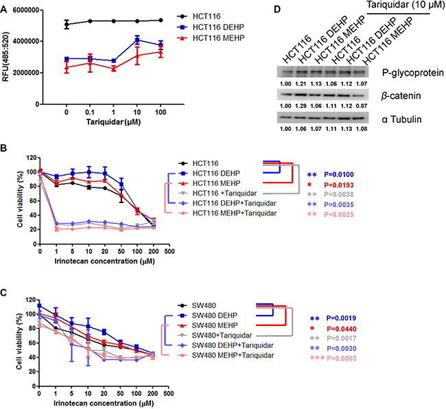 Tariquidar treatment reduced DEHP/MEHP-induced drug resistance by blocking drug efflux in HCT116 and SW480 cells.