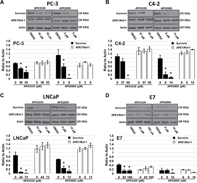 Treatment with APX3330 and APX2009 decreases survivin protein levels.