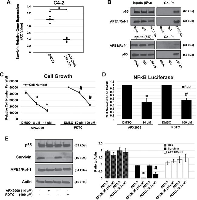 APE1/Ref-1 redox inhibition decreases survivin protein levels via NFĸB.