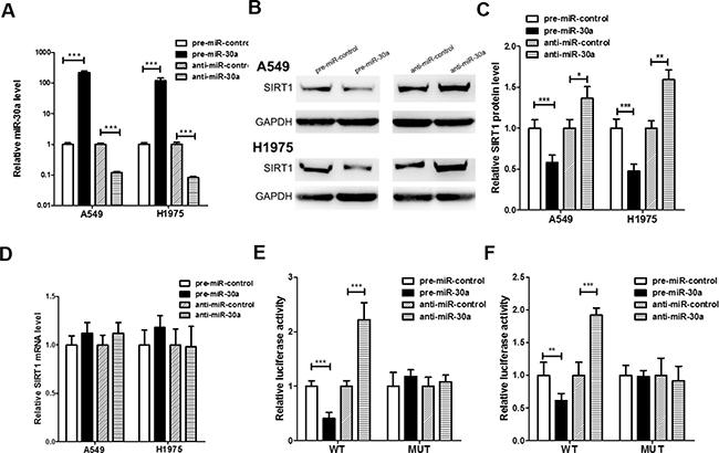 Direct post-transcriptional regulation of SIRT1 expression through miR-30a.