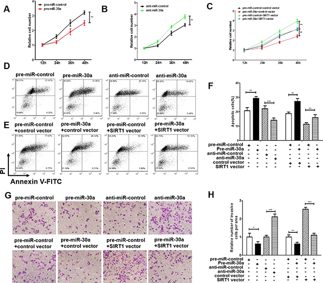 Effect of miR-30a and SIRT1 on the proliferation and apoptosis of lung cancer cells.