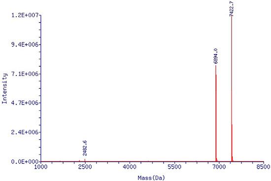 Mass spectrometry report of single stranded EpDT3 aptamer.