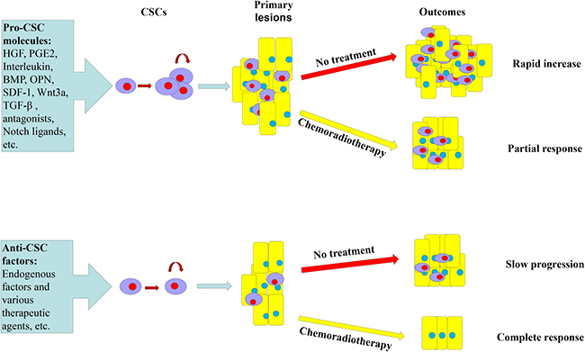 Microenvironmental molecules of colorectal CSCs.