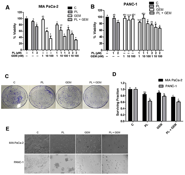 Effect of GEM, PL, and their combination on in vitro cell viability, clonogenic survival, and growth on Matrigel.