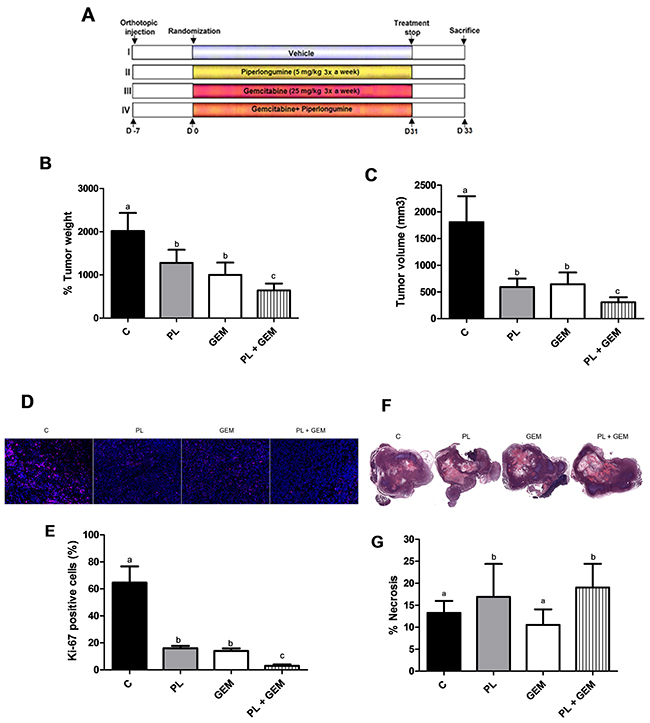 Effects of PL, GEM, and their combination on tumor growth, tumor cell proliferation, and tumor necrosis in mice implanted with MIA PaCa-2 cells.