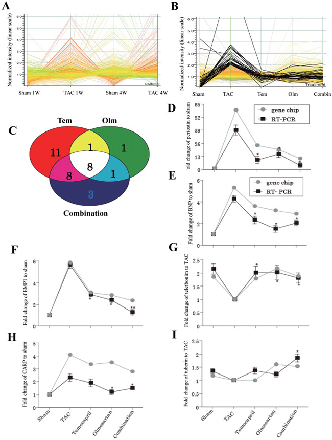 Gene expression patterns in response to TAC and drug treatment.