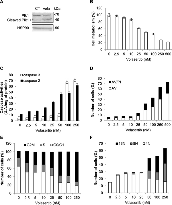 Volasertib activates caspase 2 and 3 and induces polyploidy in K562 cells.
