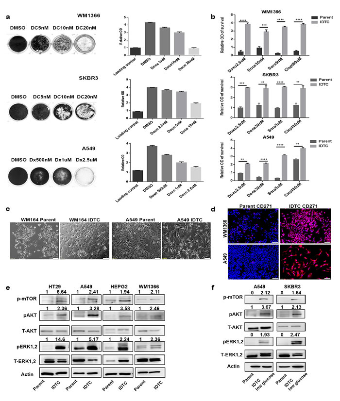 A common stress-induced transition of cancer cells into induced drug-tolerant cells (IDTCs).