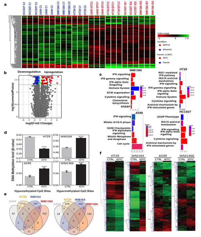 Differential expression of genes and genome wide DNA methylation in IDTCs compared to parental cells.