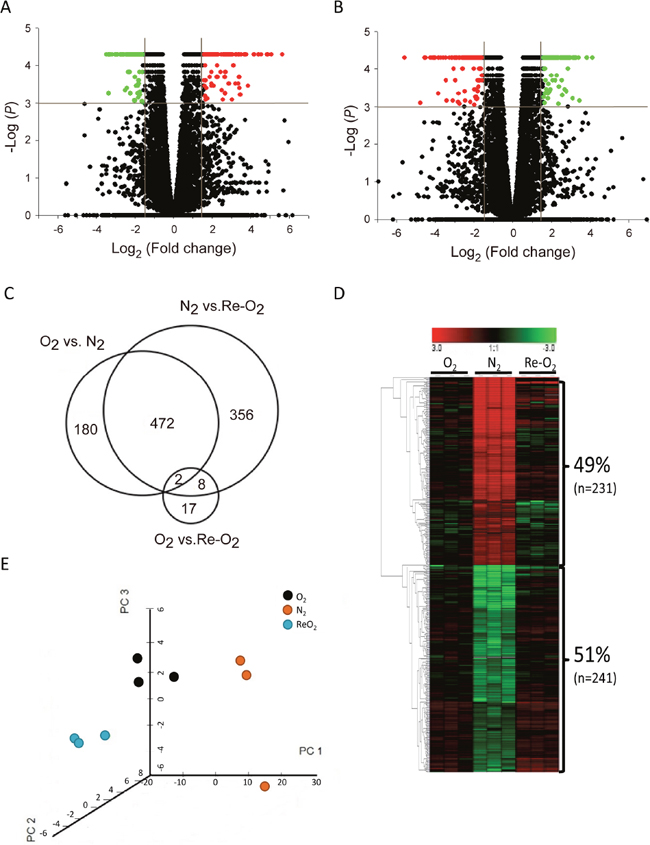 Identification of oxygen-responsive lncRNAs in MCF-7 cells using next generation sequencing analysis.