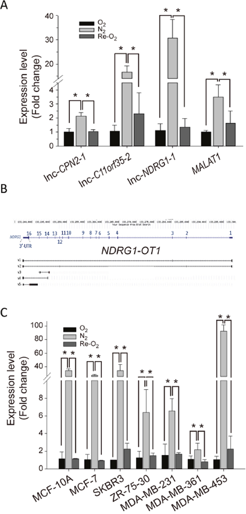 NDRG1-OT1_v4 is up-regulated in hypoxia and down-regulated in re-oxygenation.