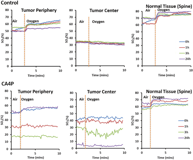 Graph showing change in blood oxygenation level at different time points (0h, 1h, 3h, and 24h) after administration of saline (control) or CA4P (120 mg/kg, IP) in different sections of tumor (tumor periphery and tumor center) compared to healthy tissue (spine).