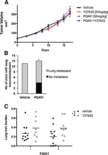 IGF-1R inhibition but not ROCK inhibition reduces the incidence of lung metastasis without affecting tumor growth in breast cancer xenografts.