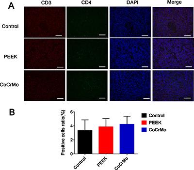 Immunofluorescence labeling of CD4+ T-cell responses.