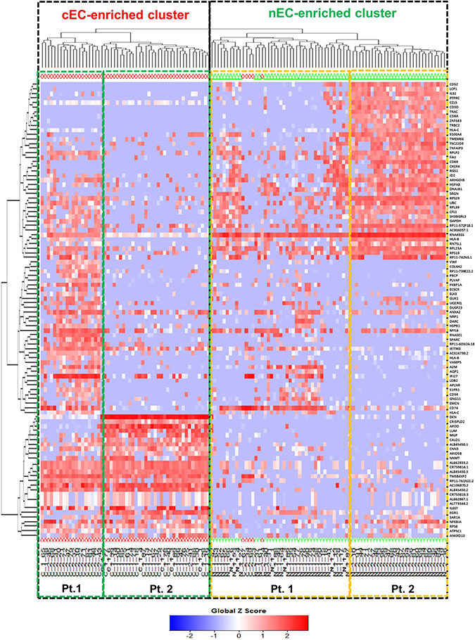 Heat map-based hierarchical clustering separates cancerous versus control ECs.