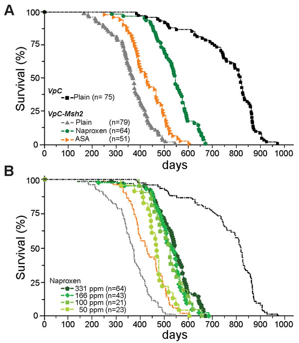 Naproxen increases the lifespan of VpC-Msh2 Lynch syndrome mice.