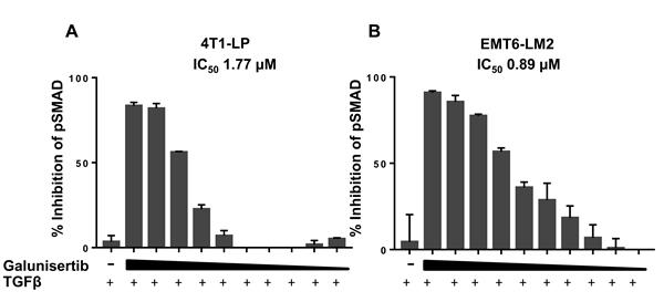 Galunisertib inhibits TGFβ mediated cellular SMAD phosphorylation